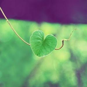 yeşil kalp şeklinde yaprak