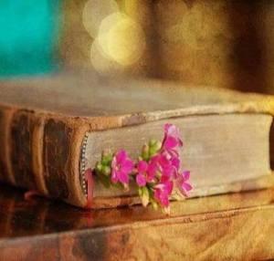 kitap arasındaki pembe çiçek
